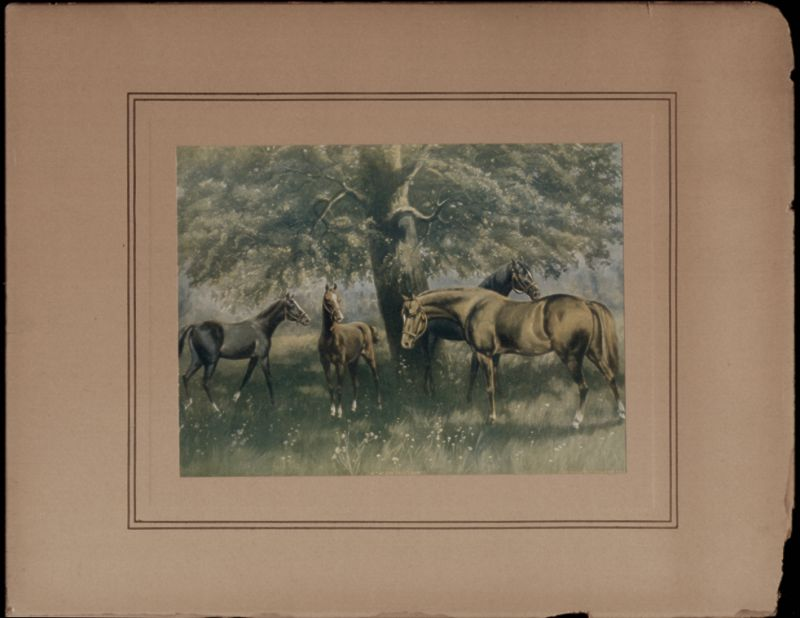 IN THE OAK TREE SHADE, 1903 COLOR PRINT OF HORSES, on board, unframed,